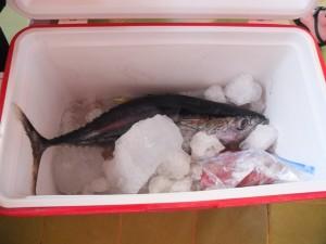 Sushi 9 - Resized